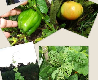How my garden Grows . . . we munch, they munch