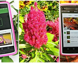 PlantSnap Mobile App – Tips and Tricks for Best Results