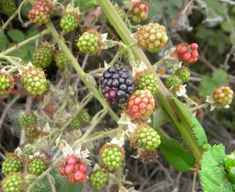 Brambles, Briars & Blackberries in an RV