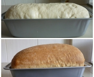 Golden Sandwich Bread