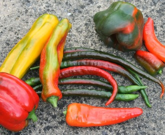 Growing Peppers and Chillies