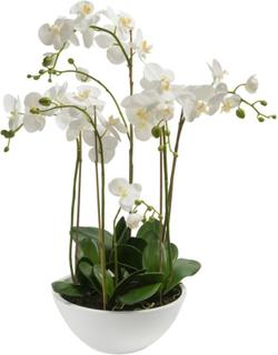 Emerald Kunstig orkidé hvit 80 cm 20.335C