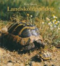 Landsköldpaddor