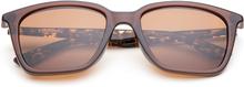 Coast - Shiny Brown