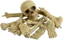 Skelettdelar i Påse med Kranium