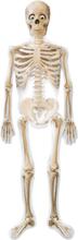 Halloween udsmykning - Skelet folie ballon 190cm