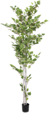 Europalms Birch tree, 180 cm