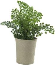 Kunstig plante bregne