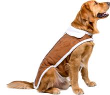 Haushund Mantel