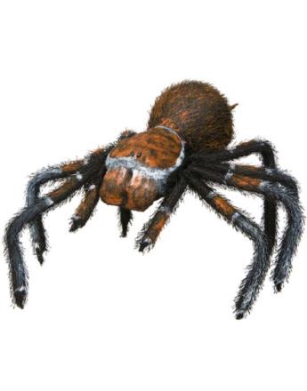 Svart og Orange Edderkopp 52 cm