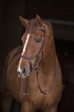 Träns Horseware Rambo Micklem Competition, Brun Cob