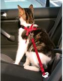 Bil säkerhetssele katt