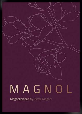 magnol