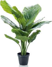 Emerald Konstväxt Calathea Orbifoliamed kruka 60 cm