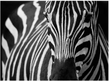 Fototapet - Vit med svarta ränder - 200x154 cm