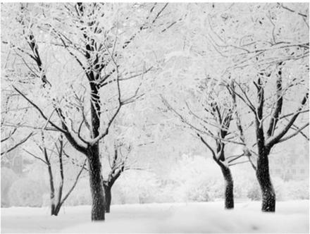 Scandinavian Artstore Fototapet - Träd - Vinter landskap - 200x154 cm