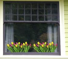Raamfolie tulpen
