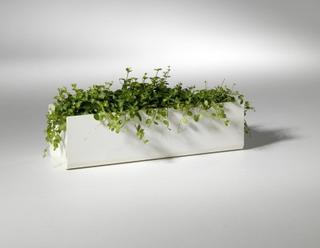 OUTLET - Urban Garden - Blomlåda