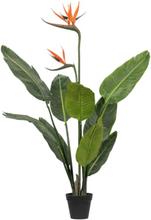 Living&more kunstig plante - Paradisfugl