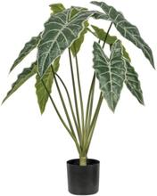 Living&more kunstig plante - Syngonium