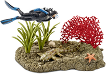 Wild life Coral reef diver