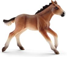 Bondegårdsdyr Mustang foal
