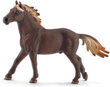 Bondegårdsdyr Mustang stallion