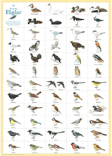 Poster Svenska Fåglar