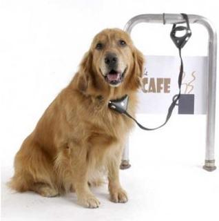 Pawz SafeSpot hundesnor med lås
