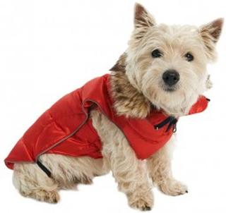 Buster Aktiv vinterjakker til hunde - to farver