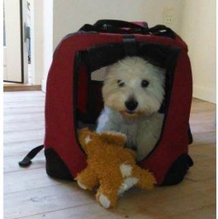 Hund i frotte krammedyr / legetøj