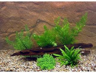 Zooplants Akvarieplanter til Rejer og Dværgkrebs - 5 planter