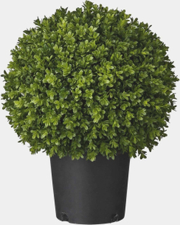 Flora plante grøn