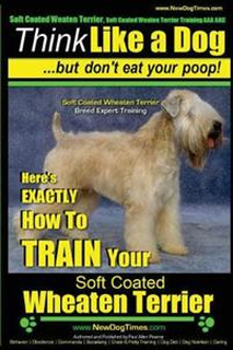 Soft Coated Wheaten Terrier, Soft Coated Wheaten Terrier Training AAA Akc Think Like a Dog But Don't Eat Your Poop! Soft Coated Wheaten Terrier Breed