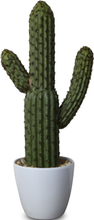 Konstväxt - Kaktus H38 cm
