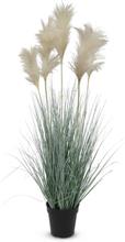 Konstväxt - Pampagräs/Sjögräs H115 cm