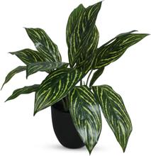 Konstväxt - Philodendron H35 cm