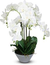 Konstväxt - Orkidè i kruka H75 cm