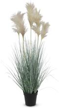 Konstväxt - Gräs/Pampagräs H82 cm