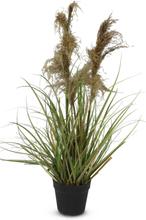 Konstväxt - Gräs/Pampagräs H115 cm