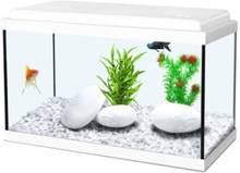 ZOLUX-akvaario Nanolife Kidz - 18 L - 40 x 20 x 25 cm - valkoinen