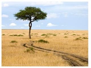 Fototapet - Savanna - Masai Mara 200x154