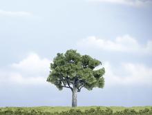 Woodland Scenics WTR1622 Träd Valnötsträd 100 mm 1 st
