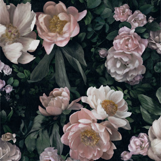 New Dawn Rose - 7234