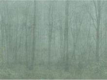 Skog Grön - 622-08