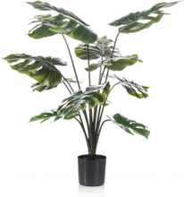 Emerald monstera-plante i krukke 98 cm