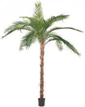 Stor kunstig Phoenix palmetræ H370 cm