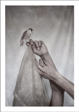 A BIRD AND TWO HANDS - Poster 50x70 cm