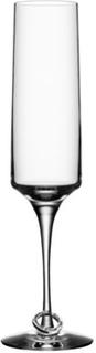 Orrefors Amor Vincit Omnia Champagneglass 18 cl 2 pk