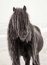 Black wild horse Poster